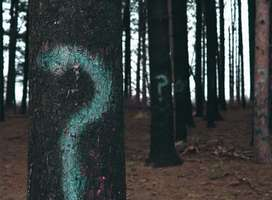 Question marks spray-painted on trees
