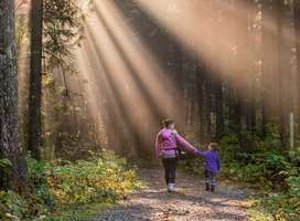 Woman and child walking hand-in-hand through beautiful forest