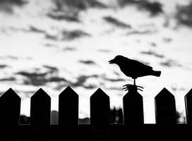 Winter scene, dark cloudy day, crow sitting on fence