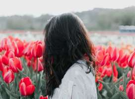 Young dark haired woman walking through field of red tulips