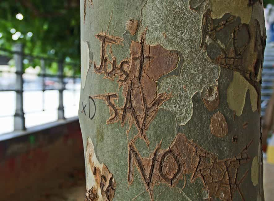 The words Just Say No carved into the bark of a tree