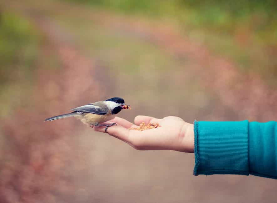 Person hand feeding a small wild bird