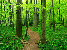 Path through a forest. Symbolic