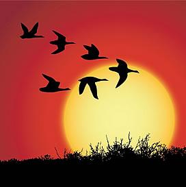 Photo of birds flying across sunset